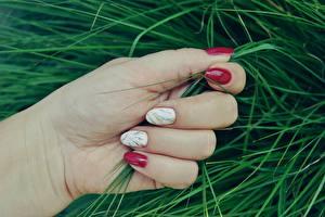 Wallpaper Fingers Closeup Grass Hands Manicure