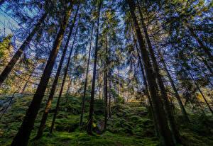 Fotos Finnland Helsinki Wald Bäume Laubmoose Kasaberget Forest Natur