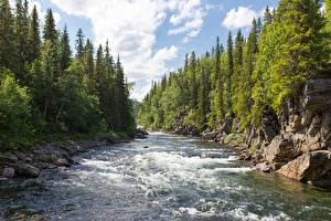 Picture Forests Rivers Spruce Crag Trees Nature