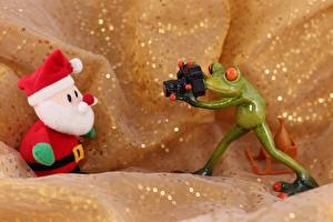 Wallpaper Frogs Santa Claus Winter hat Camera Photographer