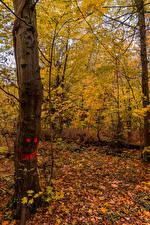 Fotos Deutschland Herbst Smilies Baumstamm Blatt Karlsruhe Natur
