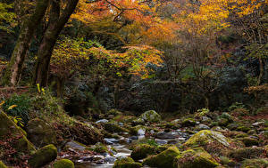 Fotos Japan Herbst Park Steine Bach Bäume Laubmoose Hananukikeikoku Valley