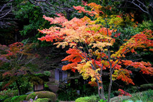 Hintergrundbilder Japan Kyōto Park Herbst Bäume