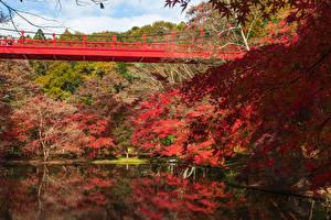 Hintergrundbilder Japan Park Teich Brücken Herbst Bäume Izumi Nature Park
