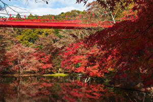 Pictures Japan Parks Pond Bridge Autumn Trees Izumi Nature Park Nature