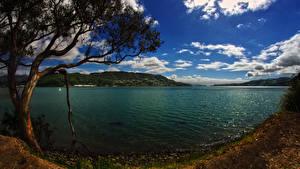 Hintergrundbilder Neuseeland Küste Himmel Bucht Bäume Wolke Otago Harbour Natur