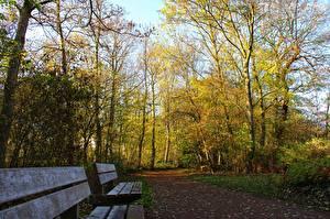 Fotos Park Herbst Bank (Möbel) Bäume Weg