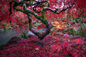 Fotos Park Herbst Teich Bäume Blatt Laubmoose Natur