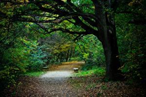 Bilder Park Herbst Bäume Blatt Weg Bank (Möbel) Natur