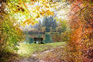 Photo Pond Autumn Bench Branches Leaf Trail Nature