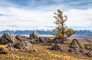 Fotos Russland Berg Steine Landschaftsfotografie Bäume Altai Natur