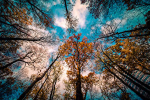 Pictures Sky Autumn Branches Clouds Bottom view Trees Nature