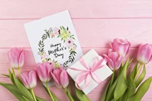 Bilder Tulpen Feiertage Rosa Farbe Geschenke Blumen