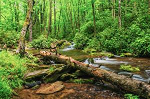 Bilder Vereinigte Staaten Wälder Steine Strauch Holzstamm Laubmoose Bach Pisgah National Forest North Carolina Natur