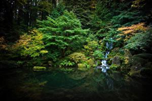 Fotos USA Garten Teich Wasserfall Steine Laubmoose Bäume Portland japanese garden Natur