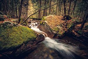 Hintergrundbilder Vereinigte Staaten Parks Herbst Wälder Steine Yosemite Blatt Laubmoose Bäche Natur