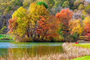 Bilder Vereinigte Staaten Park Herbst Flusse Bäume Blue Ridge Parkway Virginia