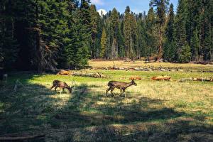 Hintergrundbilder USA Park Wälder Kalifornien Gras Sequoia National Park Natur