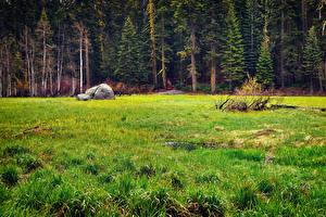 Bilder Vereinigte Staaten Park Wälder Steine Kalifornien Gras Sequoia National Park