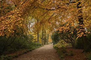 Sfondi desktop Regno Unito Parchi Autunno Alberi Avenue Garden Harlow Carr