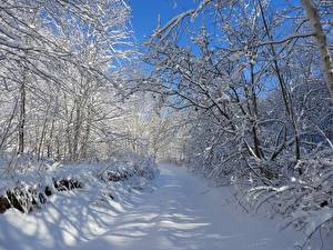 Images Winter Roads Trees Snow Branches Nature