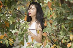 Pictures Asiatic Autumn Branches Leaf Brunette girl