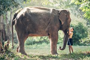 Fotos Asiatische Elefanten Gras Junge Zwei Tiere Kinder