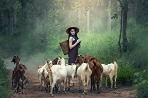 Hintergrundbilder Asiatische Hausziege Ziegen Weg Der Hut Gras Brünette Tiere Mädchens