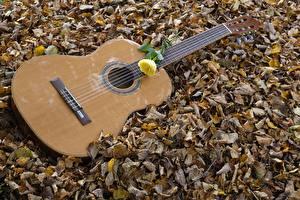 Picture Autumn Roses Guitar Leaf