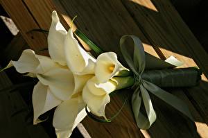 Hintergrundbilder Blumensträuße Drachenwurz Weiß Schleife