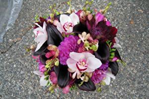 Hintergrundbilder Sträuße Orchideen Calla palustris