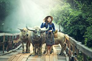 Bilder Brücken Asiaten Rinder Der Hut Horn Tiere Mädchens