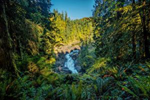 Bilder Kanada Park Wälder Wasserfall Gras Bäume Vancouver Island Parks