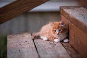 Bilder Katze Kätzchen Fuchsrot Treppe Tiere