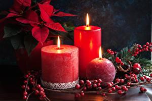 Bilder Neujahr Kerzen Beere Wolfsmilch Drei 3