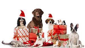 Fotos Neujahr Hunde Katze Kaninchen Weißer hintergrund Geschenke Retriever Beagle Spaniel Bulldogge Kugeln Mütze
