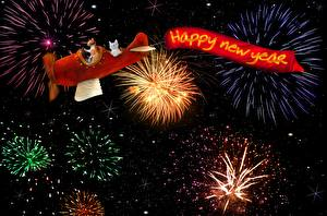 Pictures Christmas Fireworks Airplane Cat English