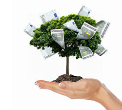 Bilder Kreativ Geld Geldscheine Euro Weißer hintergrund Hand Bäume