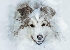Bilder Hunde Gezeichnet Schnauze Starren Sheltie Shetland Sheepdog Tiere