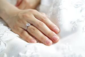 Bilder Finger Großansicht Hand Ring