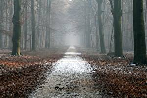 Pictures Forest Autumn Roads Trees Foliage Fog Nature