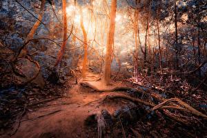 Fotos Wälder Herbst Baumstamm jungle Natur
