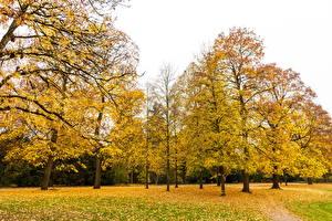 Fotos Deutschland Park Herbst Bäume Blatt Karlsruhe Natur