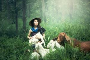 Fotos Hausziege Ziegen Asiatisches Gras Der Hut Brünette Tiere Mädchens