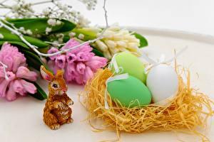 Hintergrundbilder Hasen Ostern Nest Ei