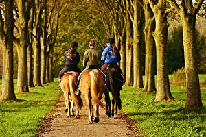 Pictures Horses Grass Walking Three 3 Trees Path Back view Allee Animals Girls