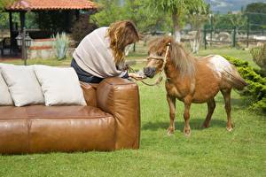 Picture Horse Sofa Pillows Grass Brown haired Sit animal