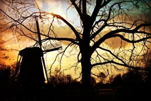 Hintergrundbilder Mühle Bäume Ast Silhouette Natur