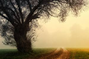 Images Morning Autumn Roads Fog Trees Grass Nature