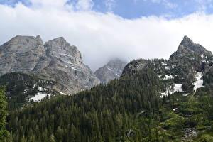 Bilder Gebirge Wälder Herbst Landschaftsfotografie Park Felsen Schnee Grand Teton National Park, Wyoming Natur